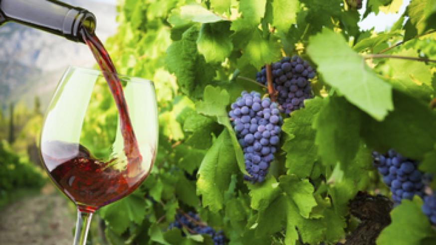 Wine tours Lake Maggiore