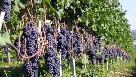 Wine tasting Lake Maggiore